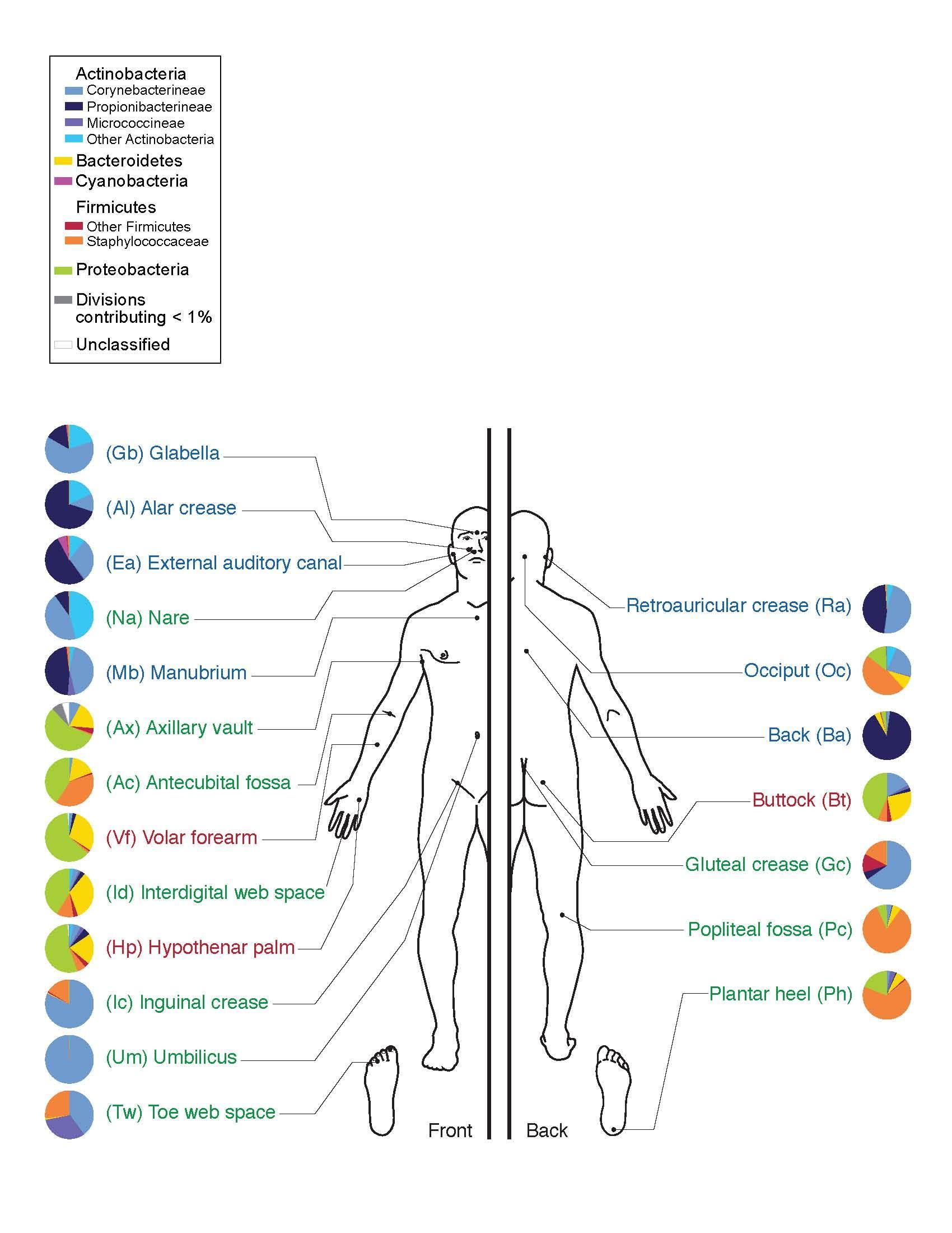 Lab 4-1 Skin microbiome.jpg