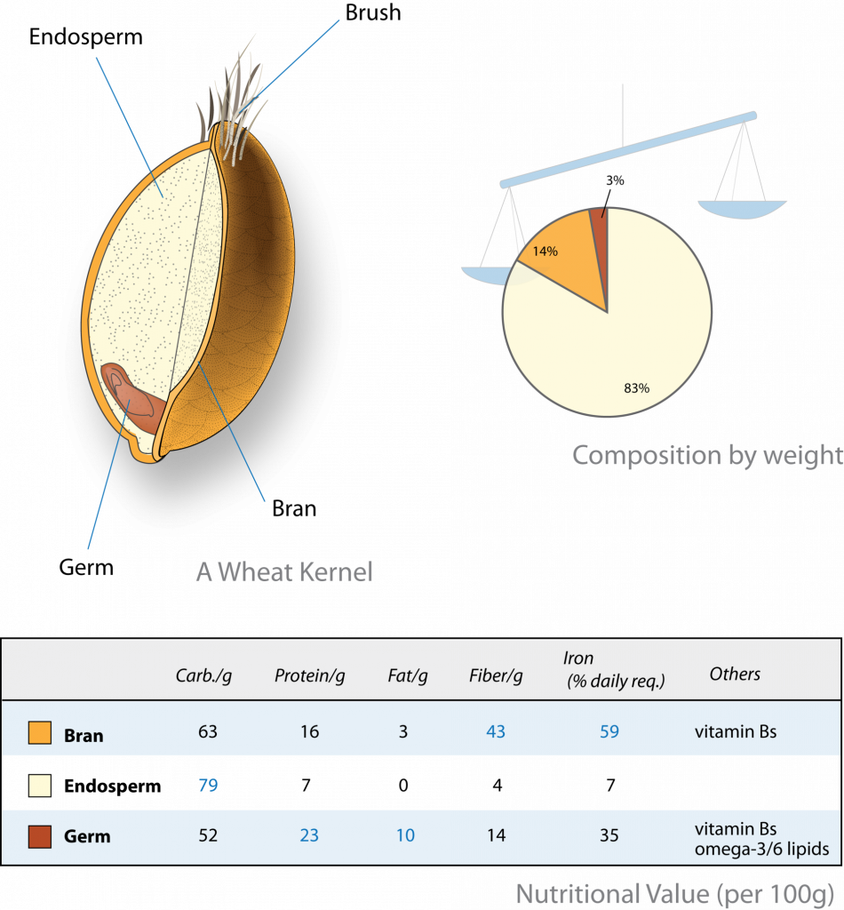 A diagram of a wheat kernel; a pie chart showing composition by weight (endosperm making up the majority); and a graph showing the nutritional value of the bran, endosperm, and germ.