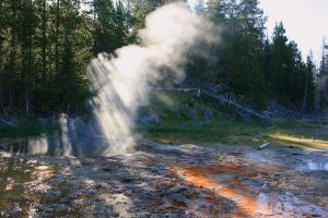 A photo of steam being released from a hot spring, the steam is iluminated by sunlight coming in through the evergreen trees in the forest