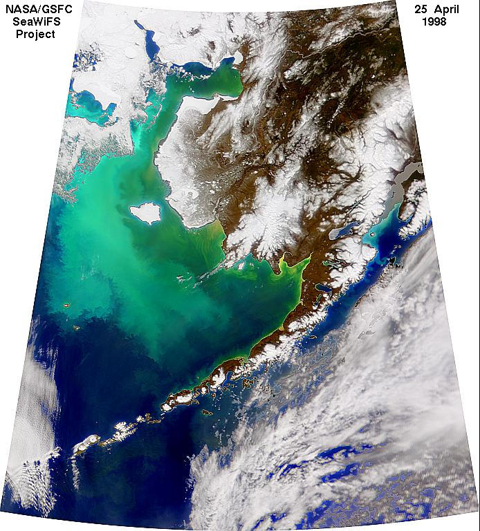 NASA SeaWiFS image taken on April 25, 1998, showing the coccolithophore bloom in the Bering Sea. This is not a false-color image: the greenish color is caused by the high concentration of phytoplankton.