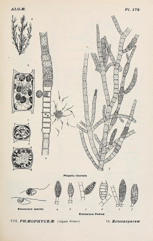Album representing all general of diatoms and their main species