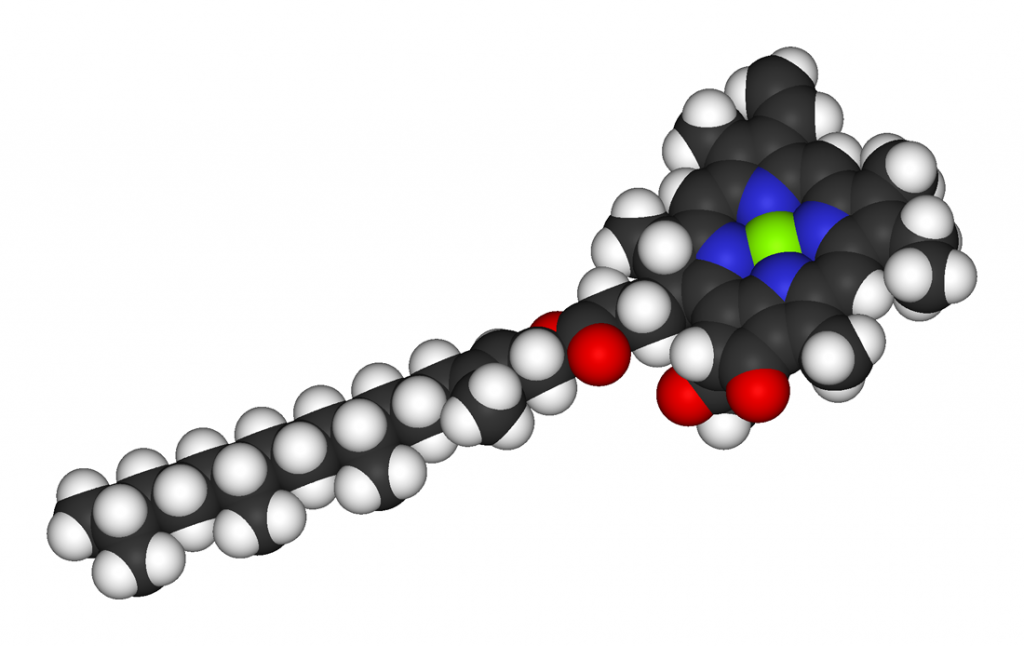 A space filling model of chlorophyll which is a thin black cylinder with white bumps and a big circle on the end: white = hydrogen, black = carbon, red = oxygen, blue= nitrogen, green = magnesium. The abundance of carbon and hydrogen and the scarcity of oxygen makes this molecule prefer to be in membranes