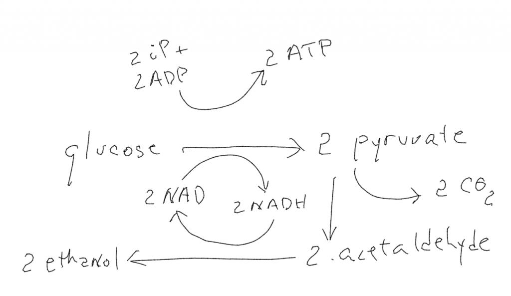 The chemical formula for alcoholic fermentation
