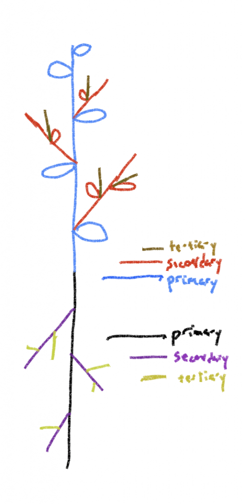 diagram depicting primary, secondary, and tertiary stems and roots.