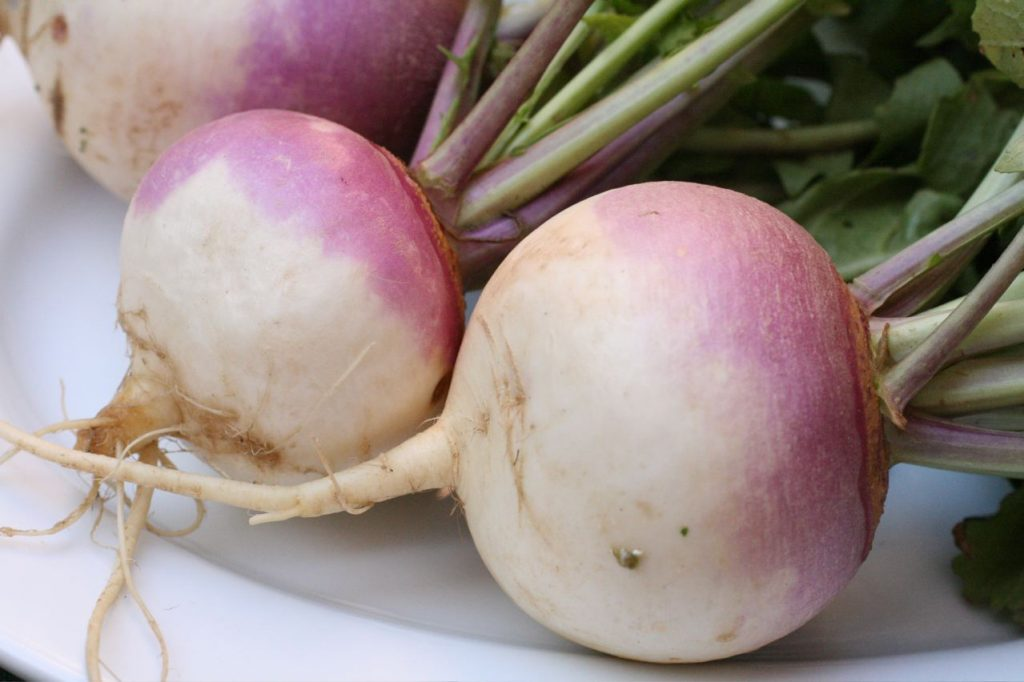 A close up of three turnips on a plate. Their bulbs are dark pink/purple at the top and white at their roots which extend off the photo; they have green stalks growing from the bulb