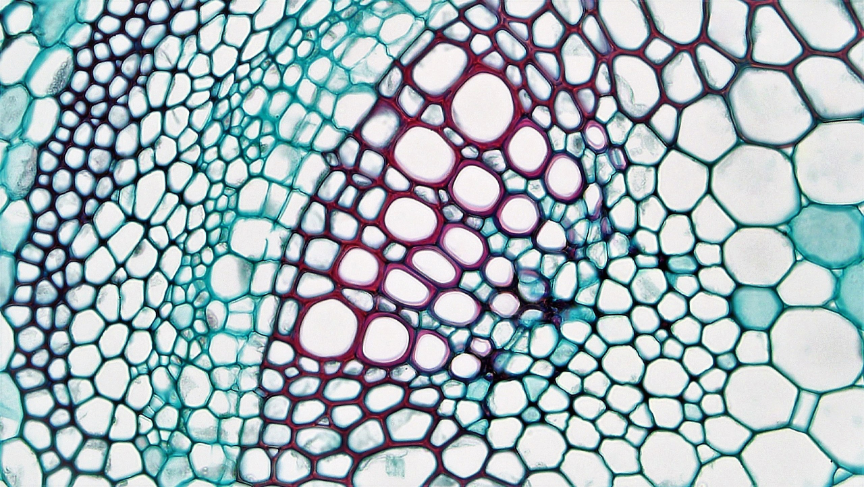 Cells of varying sizes and thicknesses, ranging from blue and purple