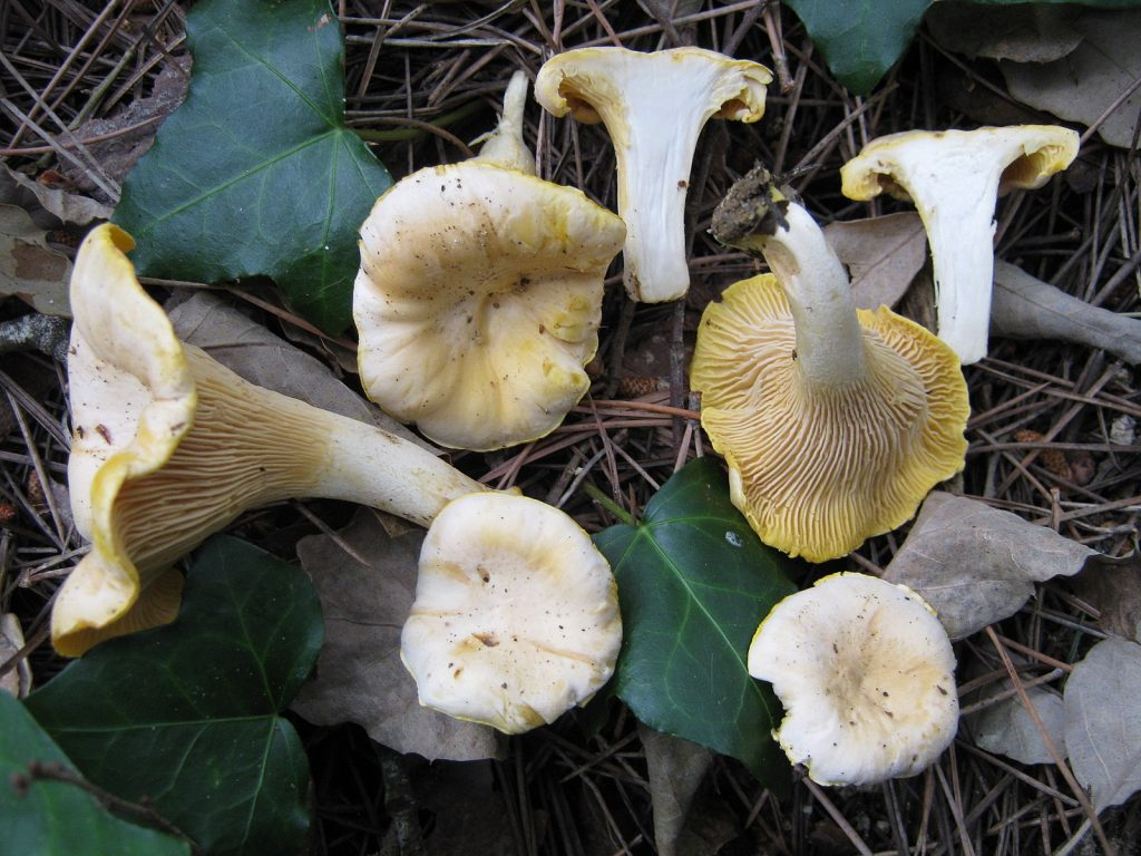 Several fungi resting in the leaves and twigs