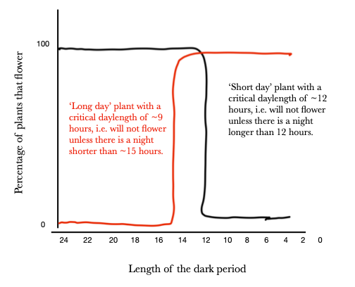 Graph X-length of the dark period Y-percentage of plants that flower. Long day plants flower not at all, and then if the night is shorter than 15 hours they raise to 100%. The inverse is true for short day plants