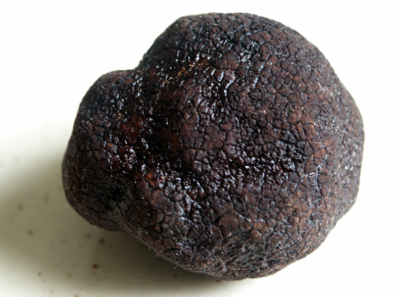 Black truffle, imperfect spherical shape with craggly surface and odd