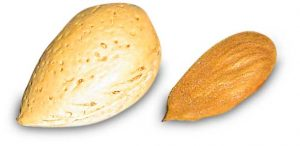 Large, paler almond 'nut', enclosing a single seed, those seeds are smaller and darker brown shown to the right