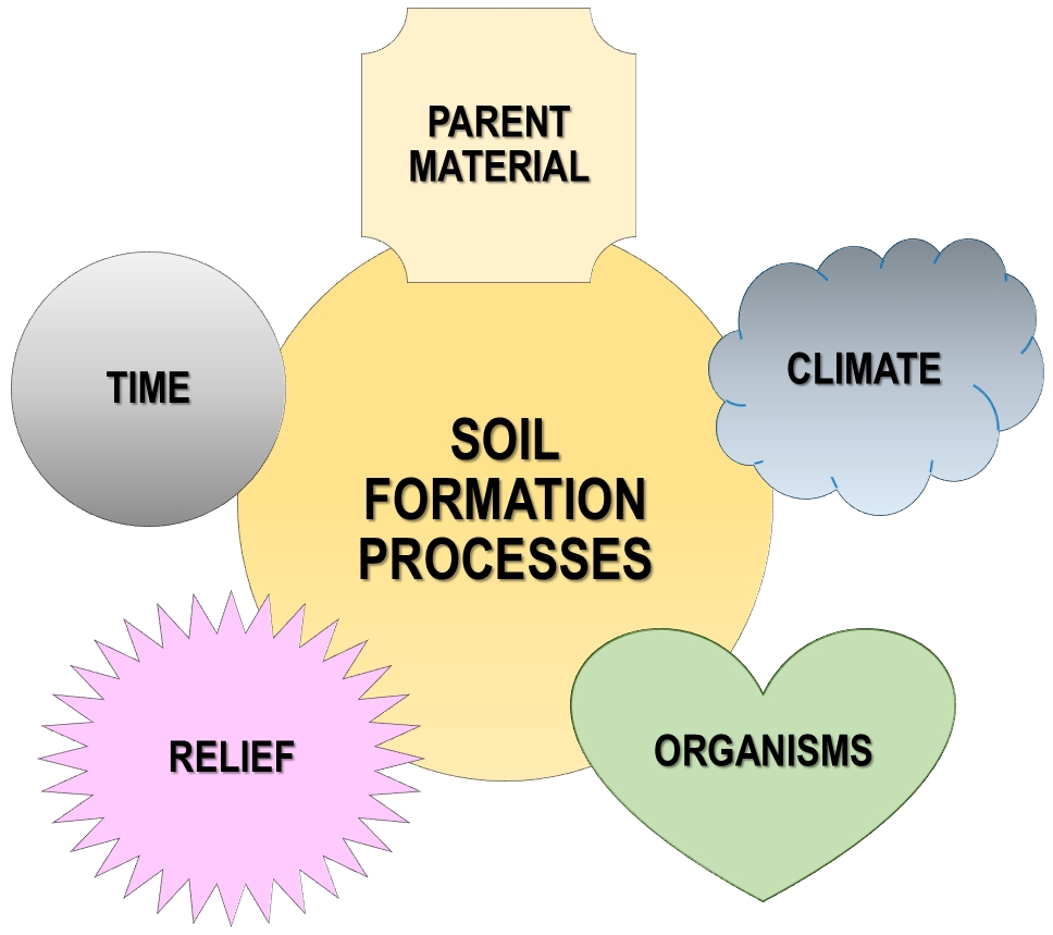 Soil formation processes: Parent material, climate, organisms, relief, and time.