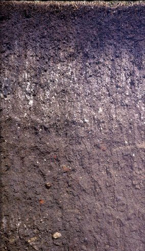 soil cross section showing dark soil at the top, then white flecked soil, and then rockier brown soil.