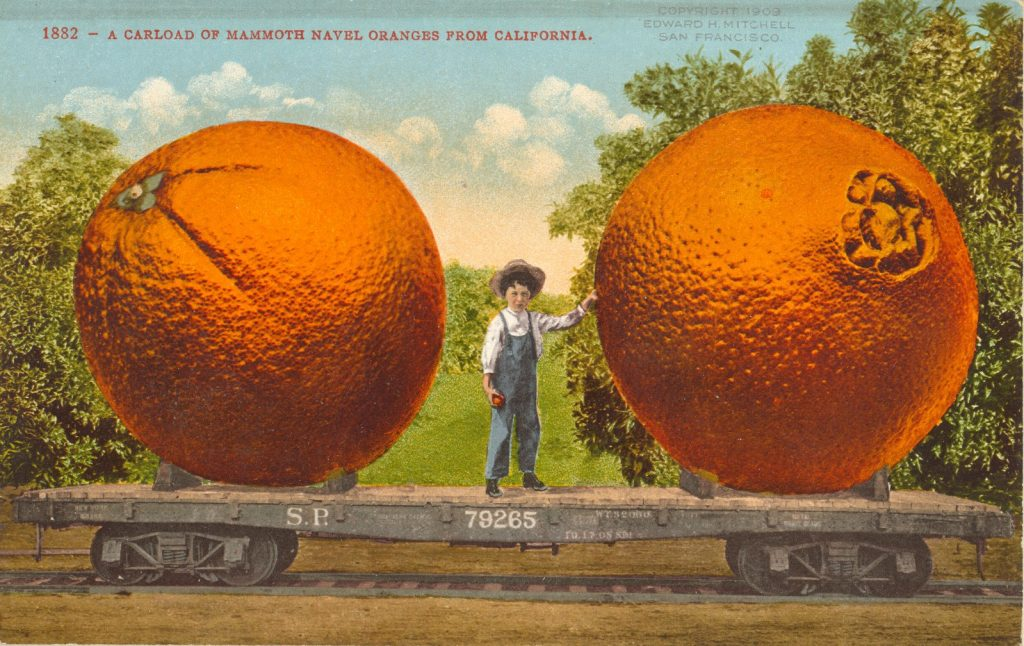 A 1910 postcard featuring a carload of mammoth navel oranges from California