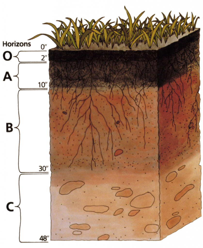 """a graphic of the profile of soil. Different """"horizons"""" are labelled: 0""""-2"""" is O, 2""""-10"""" is A, 10""""-30"""" is B, and 30""""-48"""" is C."""