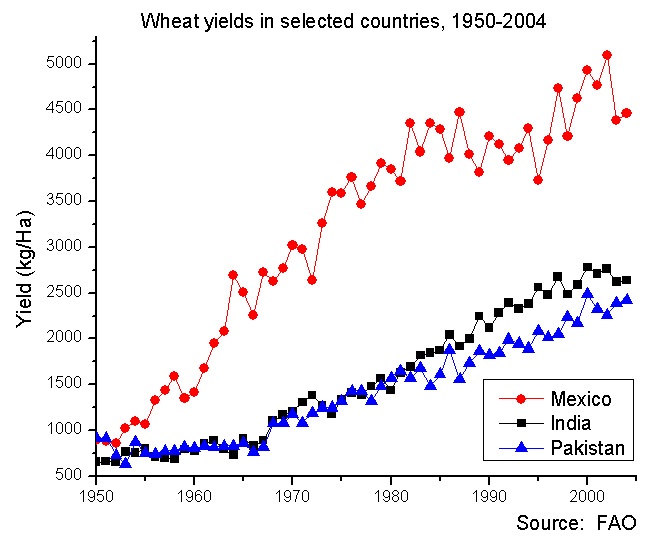 A graph showing the wheat yields in Mexico, India, and Pakistan between 1950 and 2004. Mexico's yields are significantly higher, but all three countries output grows over the time period.