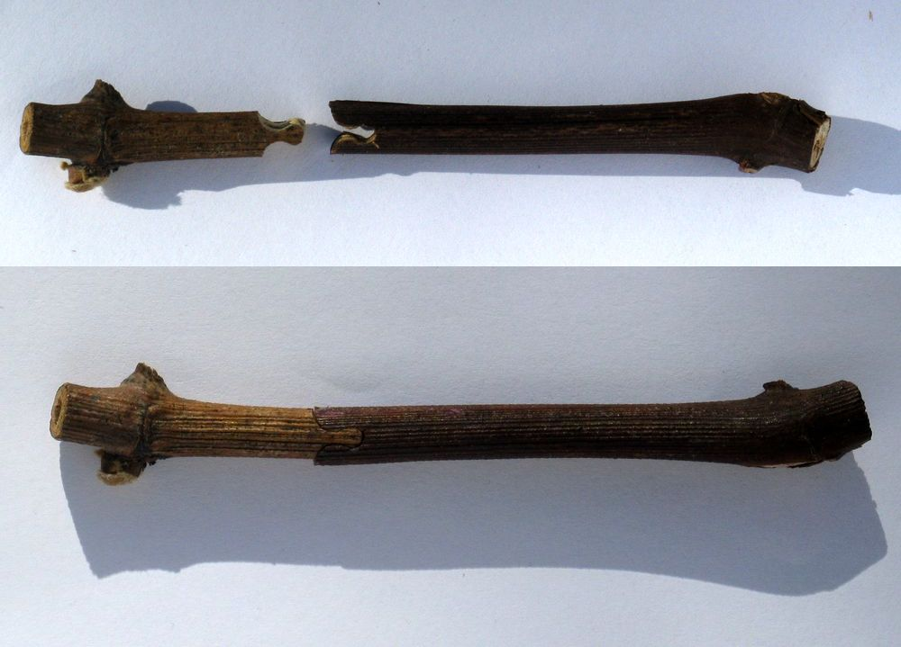 two images, the top showing two stems with a notch carved into one and a piece protruding in the other. The second photo shows the two parts fitting together.