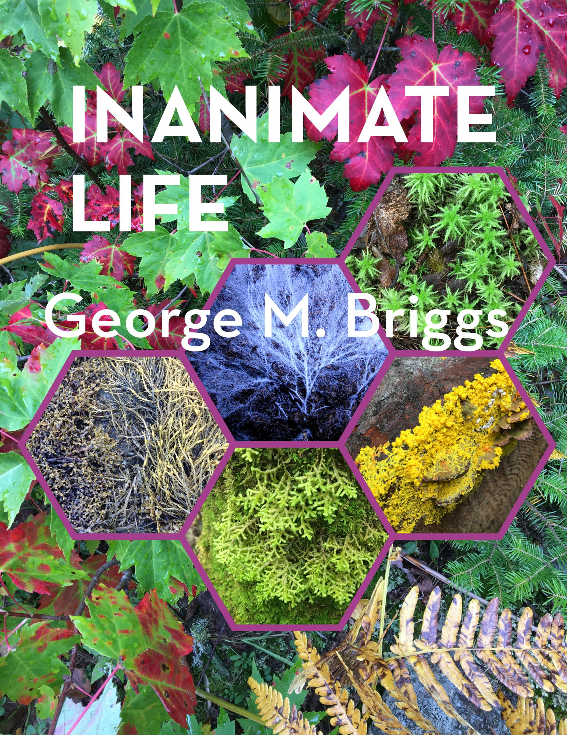 Cover image for Inanimate Life